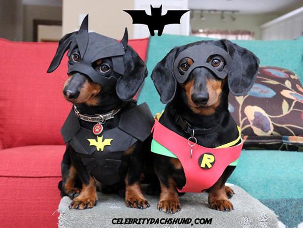 Batdog y robindog