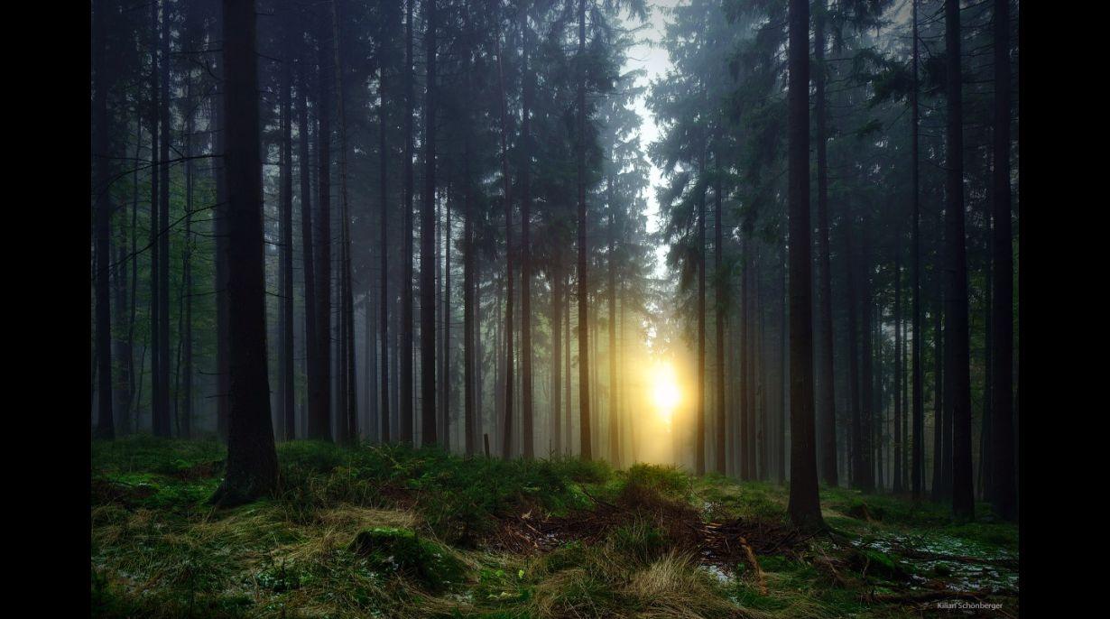 Bosque de Bavaria, Alemania.