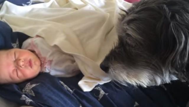 Ashlie - perro - niñera