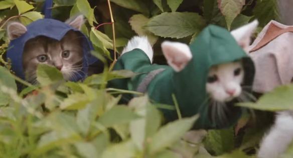 Assassin's Creed-felina