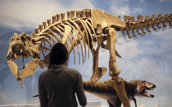 Huesos de dinosaurio en 3d
