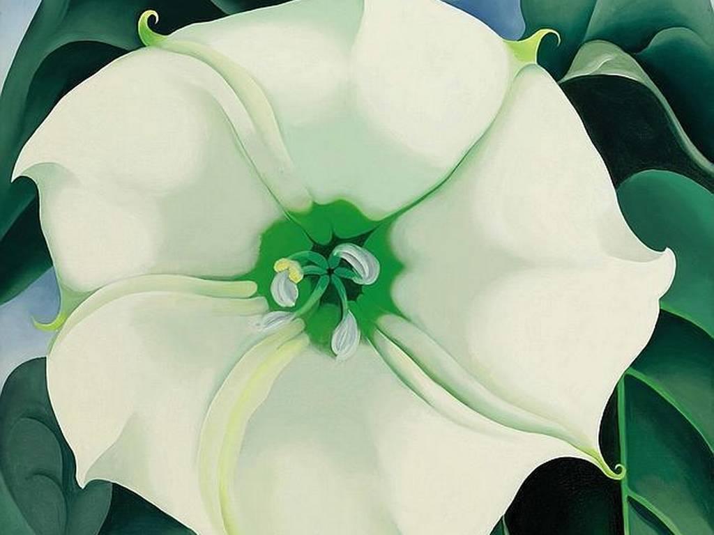 Jimson Weed-White Flower No.1