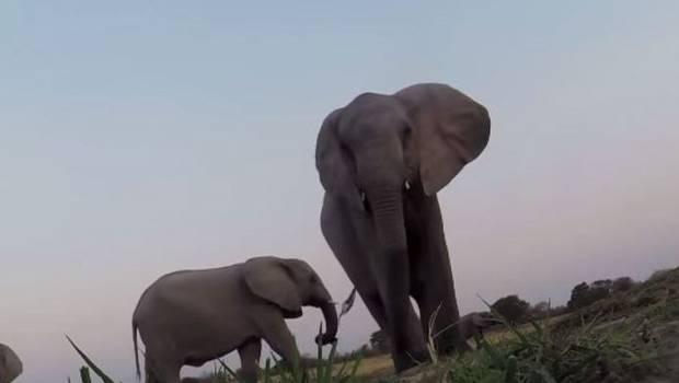 elefantes-GoPro