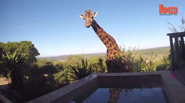 jirafa bebe sedienta