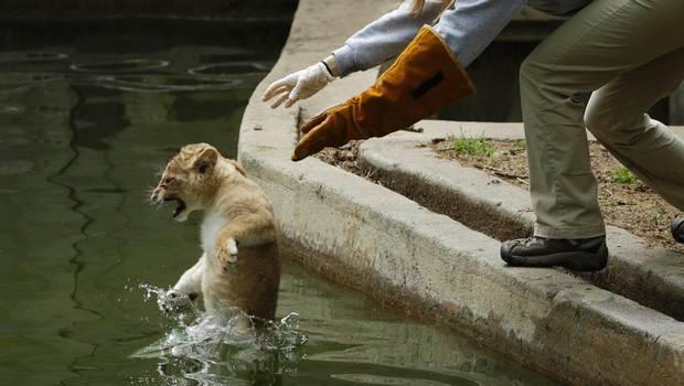 leon-nadando