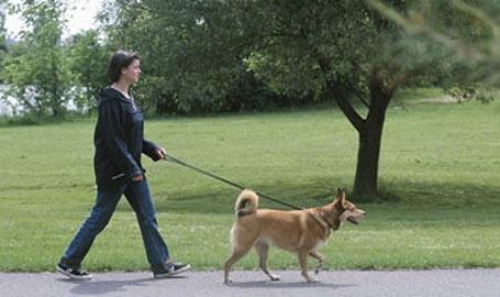 pasear-a-tu-perro