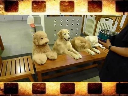 perros que rezan antes de comer