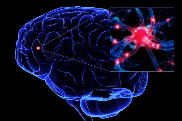 Un grupo de investigadores de E.U. ha desarrollado un modelo computacional para explicar cómo retienen las neuronas ciertos recuerdos pocas horas después de un evento